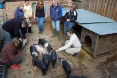 Choosing Piglets
