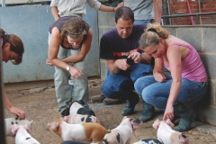 Looking at piglets
