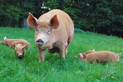 Tallulah takes her litter for a walk