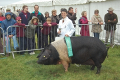 Reserve Best in Show at Heathfield