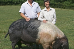 Saddleback Boar